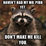 Mr Pibb raccoon